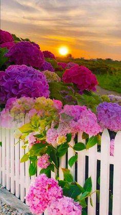 Wallpaper Nature Flowers, Beautiful Landscape Wallpaper, Flower Background Wallpaper, Beautiful Flowers Wallpapers, Beautiful Rose Flowers, Scenery Wallpaper, Flowers Nature, Amazing Flowers, Beautiful Landscapes