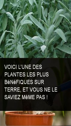 Here is one of the most beneficial plants on earth, and you did not know it . - Santé et Beauté Jardin Decor, Sang, Horticulture, Voici, Detox, Health Fitness, Earth, Crochet, Flowers