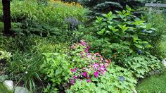 A New Found Passion | Fine Gardening