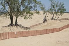 Mount Baldy Restoration, Indiana Dunes National Lakeshore, Indiana (pinned by haw-creek.com)