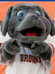 """Trapper the Weimaraner is a former mascot for the Cleveland Browns. He was joined by CB, TD, and Chomps. His main interest outside of Browns football was health and fitness. His favorite position in football is running back, and he excelled at physical education in school. He's been known to shout """"Here we go Brownies, here we go"""" from time to time, and he's partial to dawg bones and gridiron popcorn."""