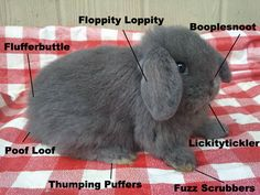That about sums it up - The anatomy of a bunny… :)