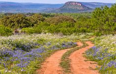 The Red Road - fine art print, landscape photography, Texas, Hill Country, western, spring, flowers, bluebonnets on Etsy, $49.99