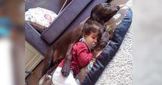La historia de Denzel, el perro que intenta dar un giro a la vida de Alonso un niño de 5 años con 99% de discapacidad: #perro #perros #goldenretrievers #goldenretriever #animales #animal #mascota #mascotas #sevilla #noticias #noticia #dog #schnauzi #dogs #perrodeservicio