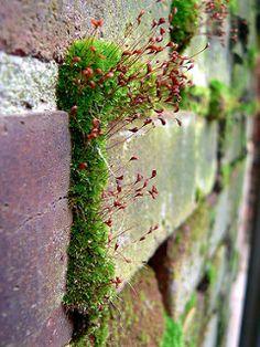 Bricks, Moss & Fruiting Bodies | von Gavatron