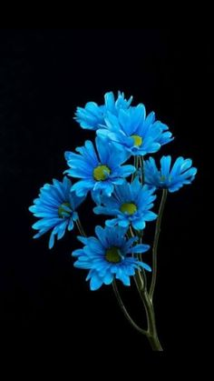 ▷ 1001 + spring wallpaper images for your phone and desktop computer - - ertug All Flowers, Exotic Flowers, Amazing Flowers, Beautiful Flowers, Flower Aesthetic, Blue Aesthetic, Blue Flower Wallpaper, Spring Wallpaper, Everything Is Blue