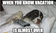 vacation is over - Google Search