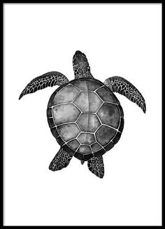 Turtle Poster in the group Prints / Sizes / 50x70cm | 20x28 at Desenio AB (2271)
