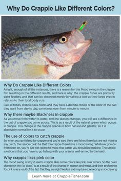 Why Do Crappie Like Different Colors: Mood swings in the crappie fish resulting in different results, and here is why: the crappie fishes are primarily sight feeders, and that can be observed merely by taking a look at their large eyes in relation to their total body size. Crappie Lures, Crappie Jigs, Crappie Fishing Tips, Fishing Rigs, Fishing Stuff, Fishing Guide, Fishing Bait, Gone Fishing, Fishing Lures
