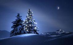 Christmas Lights Scenery Yet there are warm lights Christmas Tree Wallpaper, Holiday Wallpaper, Christmas Desktop, Beautiful Christmas Trees, Magical Christmas, Christmas Night, Blue Christmas, Merry Christmas, Christmas 2015