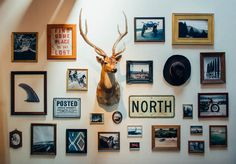 I&R - Wall Inspiration. How to include taxidermy into trendy home decor.