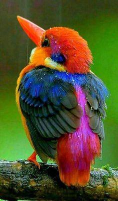 Beautiful Kingfisher.