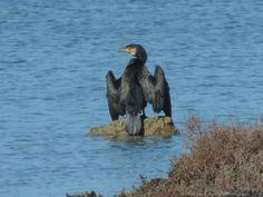 The cormorant by Francesca Murroni Ph on 500px