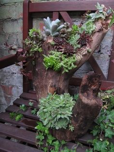 Succulents in driftwood - Gardening Life