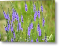 Wildflower 8331 Metal Print by Bonfire #Photography