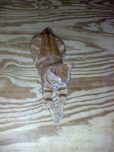Camouflage cat