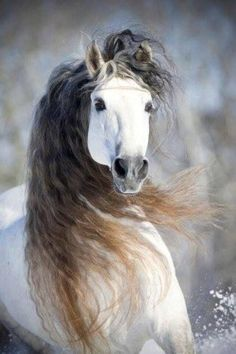 horses are just such beautiful creatures ! Most Beautiful Animals, Beautiful Horses, Beautiful Creatures, Simply Beautiful, Absolutely Gorgeous, Horse Photos, Horse Pictures, Animal Pictures, Animals And Pets
