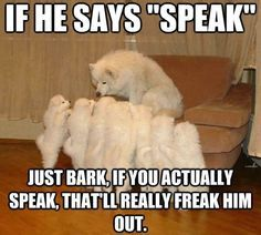 dogs are the most amazing creatures - Google Search