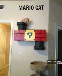 diy cat wall tunnel | Awesome! Mario Cat Tunnel!