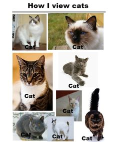 Why am i laughing so hard at this?        ….omg this is so true.     Bitch please, it's gray cat, brown cat, white cat, multi-colored cat.    Get it together.