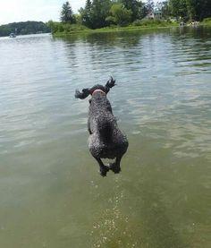 Flying poodle wet landing