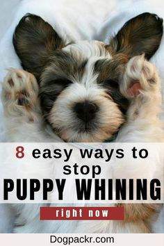 If you've recently brought a puppy home, chances are he's whining and crying a lot! There are actually quite a number of reasons for that. But more important is the question: how do you stop your puppy from whining and crying all the time? In this article you'll get 8 tips on what to do when your puppy is crying and whining. #puppy #cryingpuppy #puppytraining #dogtraining