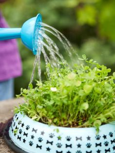 How to Grow Pet Grass - Why not grow some tasty treats for your pets? Cats, dogs, guinea pigs and rabbits love to nibble plants, but it's important to provide them with ones they can safely eat. The grasses grown here provide nutrition for your pets as well.