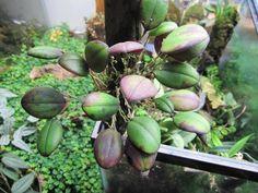 Perennial Flowering Plants, Perennials, Planting Flowers, Orchids, Vivarium, Beach House, Mini, Beach Homes, Perennial