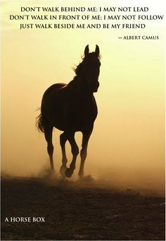 Of all the horses that have crossed my path, I have loved them all. Each one holds a special place in my hears.