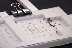 Ants in Space study launches citizen science for students worldwide - http://scienceblog.com/77561/ants-in-space-study-launches-citizen-science-for-students-worldwide/