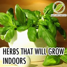 Herbs That Will Grow Well Indoors - Nature Hacks – Natural Solutions For Everyday Life Hydroponic Gardening, Hydroponics, Container Gardening, Gardening Tips, Organic Gardening, Indoor Garden, Garden Plants, Indoor Plants, Outdoor Gardens