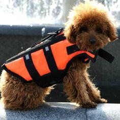 Amazon.com : Orange Light Weight Pet Dog Life Jacket Swimming Safety Vest Option: S  $14.00
