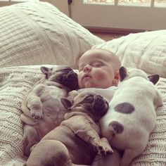 Baby Covered In French Bulldog Puppies  - so cute!!