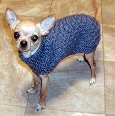 Free Crochet Pattern Chihuahua Sweater : 1000+ images about Dog Sweaters (knit & crochet) on ...