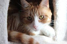 Kobe cat