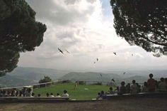 Vol lliure de rapinyaires al centre Cim d'Àligues de Sant Feliu de Codines (Barcelona)