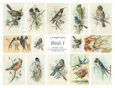 BIRDS, digital collage sheet, vintage images, art, cards nature illustration garden spring Victorian ephemera DOWNLOAD. $3,95, via Etsy.