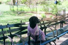 The animals of Central Park.  #DTUSA #35mm #believeinfilm