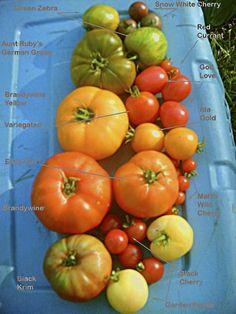 Heirloom tomatoes, YUM !