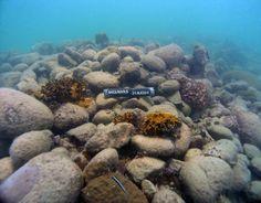 Learn about 3 of Florida's most famous shipwrecks! http://aquaviews.net/explore-the-blue/3-famous-shipwrecks-florida/