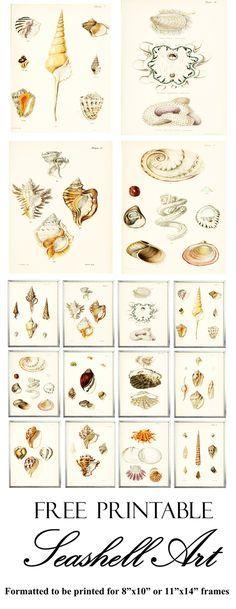 "Free Printable Seashell Art.  Formatted to fit an 8"" x 10"" or 11"" x 14"" frame. www.simplymadebyrebecca.wordpress.com"