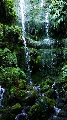 Beautiful Photos Of Nature, Nature Pictures, Amazing Nature, Beautiful Landscapes, Beautiful Places, Nature Gif, Nature Videos, Paludarium, Nature Aesthetic