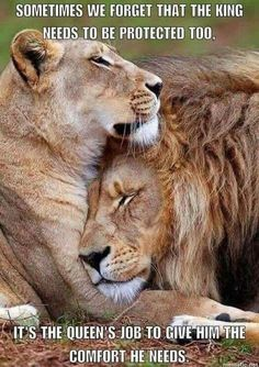 Anicklebitome — Sometimes Lioness Quotes, Animals Beautiful, Cute Animals, Lion And Lioness, Lion Love, King Quotes, My Queen Quotes, Lion Pictures, Warrior Quotes
