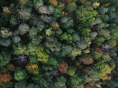 Trees make a green mosaic #photography #aerial_photography #forest