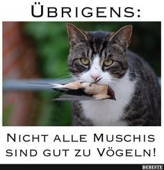 Facebook Humor, Funny Sports Pictures, Cool Pictures, Sarkastischer Humor, Animals And Pets, Funny Animals, Cat Memes, Funny Moments, Picture Video