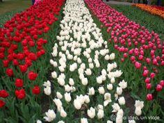 #Holanda - 15 cosas imprescindibles que ver y hacer a lo largo del año #Holland #Netherlands #Keukenhof #Tulips