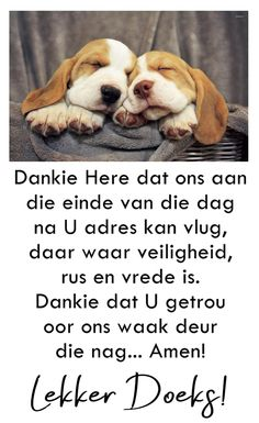 Good Night Wishes, Good Night Quotes, Goeie Nag, Afrikaans, Van, Messages, Dogs, Animals, Good Evening Wishes