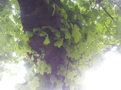 Onder de boom bij de maastunel