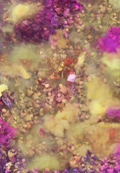 Katrin Korfmann > Gorgeous colour madness at Holi in India as thousands of people throw vibrant powder.