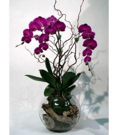 ORCHIDÉE SIGNATURE #florist #pourquoipasfleurs
